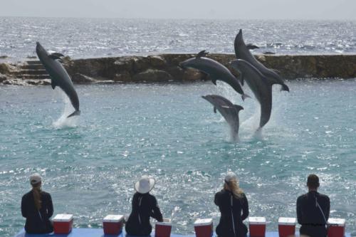 Curacao 2017 18 dieren